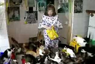 crazy cat lady on dating site