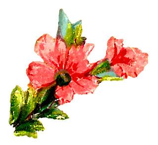 flower floral clipart watercolor craft digital downloads botanical art