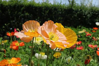 Manfaat Matahari Bagi Tumbuhan