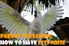 parrot Screaming reasons and how to get minimize it