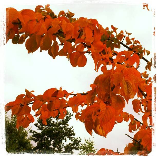 When Autumn Leaves Are Falling From The Tree