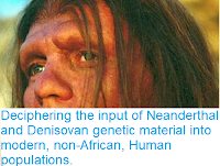 https://sciencythoughts.blogspot.com/2018/08/deciphering-imput-of-neanderthal-and.html