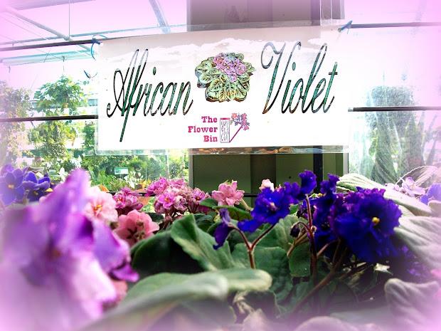 Cyclamen plant nanny