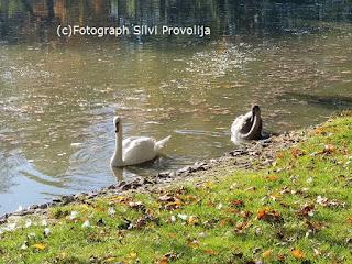 (C)Fotograph Silvi Provolija