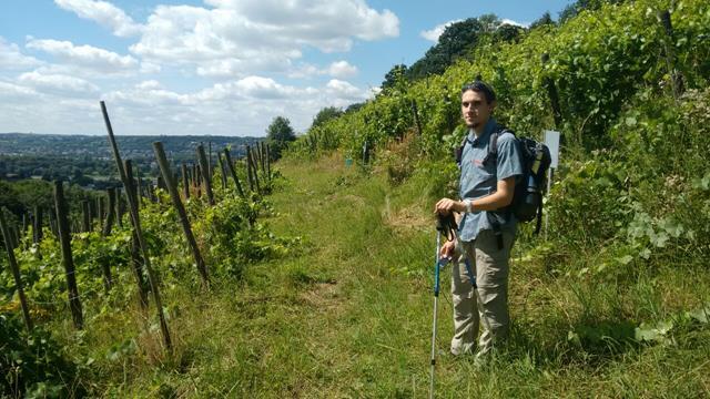 Ich stehe auf einem schmalen Wanderweg inmitten von Weinreben im Siebengebirge