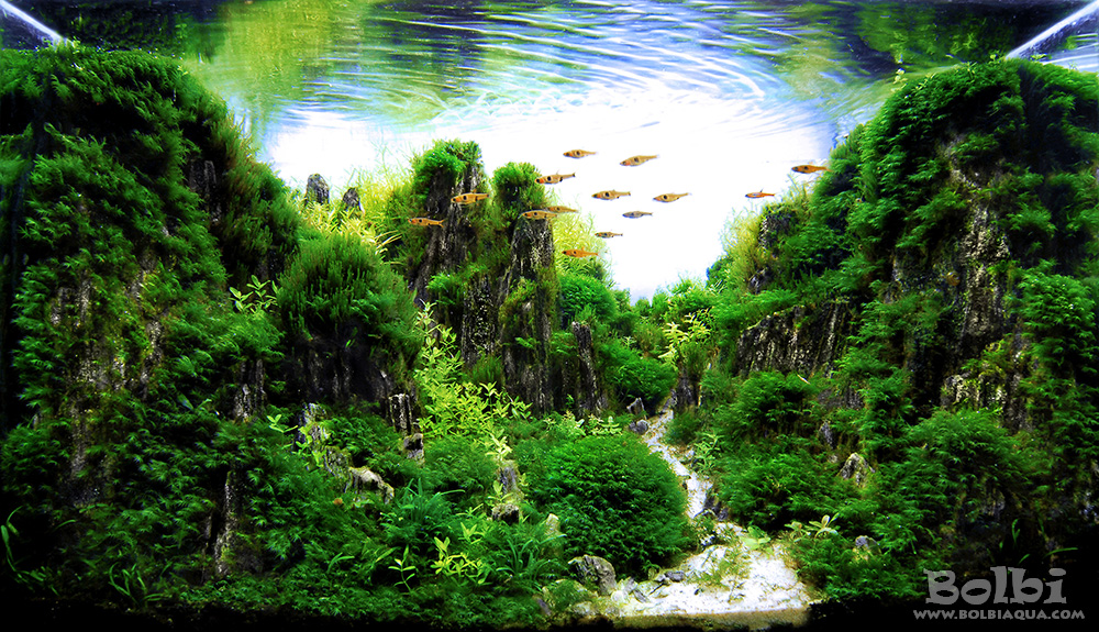 Aquascaping Competition Results: