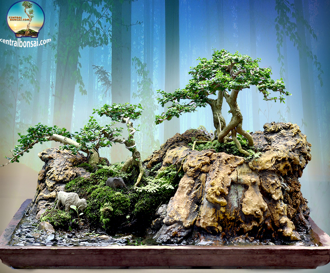 Tanaman Bonsai Untuk Dekorasi Rumah Centralbonsai Com Berbagi