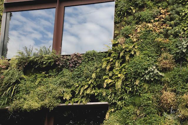 Paryż zielona ściana