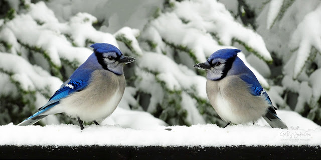 Birds In Winter Photo