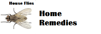 Home Remedies to Get Rid of Flies Naturally