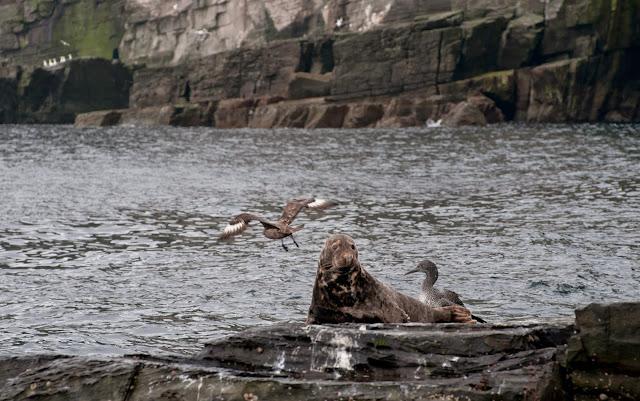 Noss, Shetland, Scotia