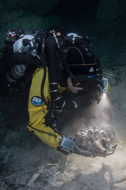 Ice Age fossils found in Mexican underwater cave