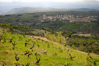 LA FOTO DE HOY: Cambrico vineyards 1