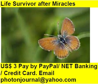 Life Survivor after Miracles