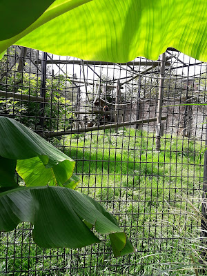 vautours-dans-la-voliere