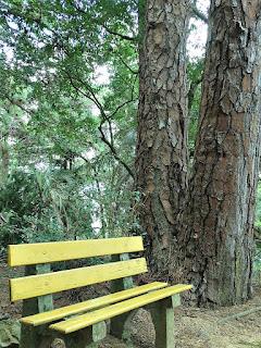 Banco em Meio aos Pinus - Jardim Botânico de Porto Alegre