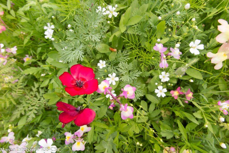Las praderas pict ricas del real jard n bot nico de madrid for Como ir al jardin botanico