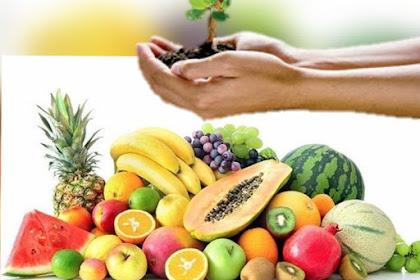 Biofertilizer solusi pupuk pertanian organik