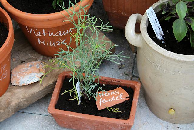 Meerfenchel auf der Terrasse 2015 | Arthurs Tochter Kocht von Astrid Paul