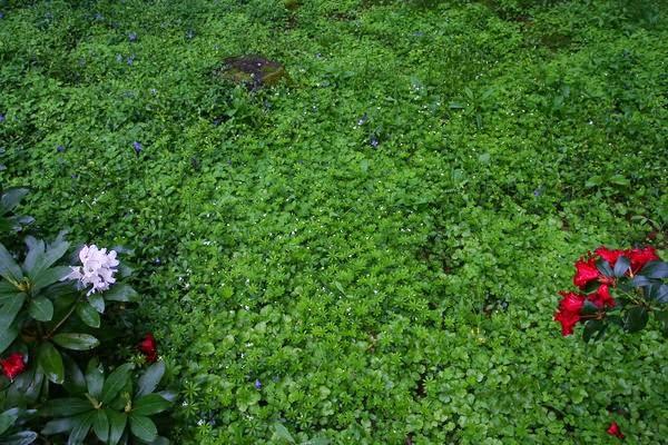 Waldbodenpflanzen