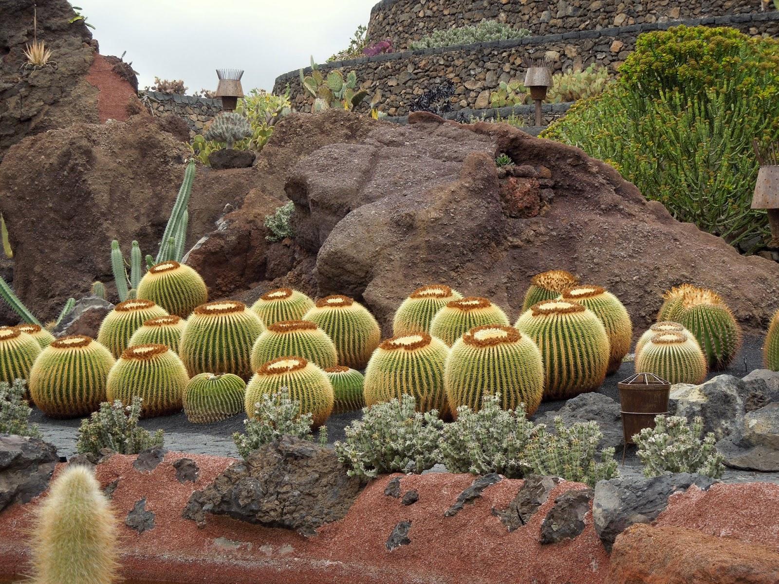 Jard n de cactus de lanzarote echinocactus bot nic serrat for Jardin de cactus lanzarote