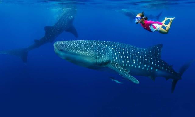 maldive-snorkeling-con-squalo-balena-poracci-in-viaggio