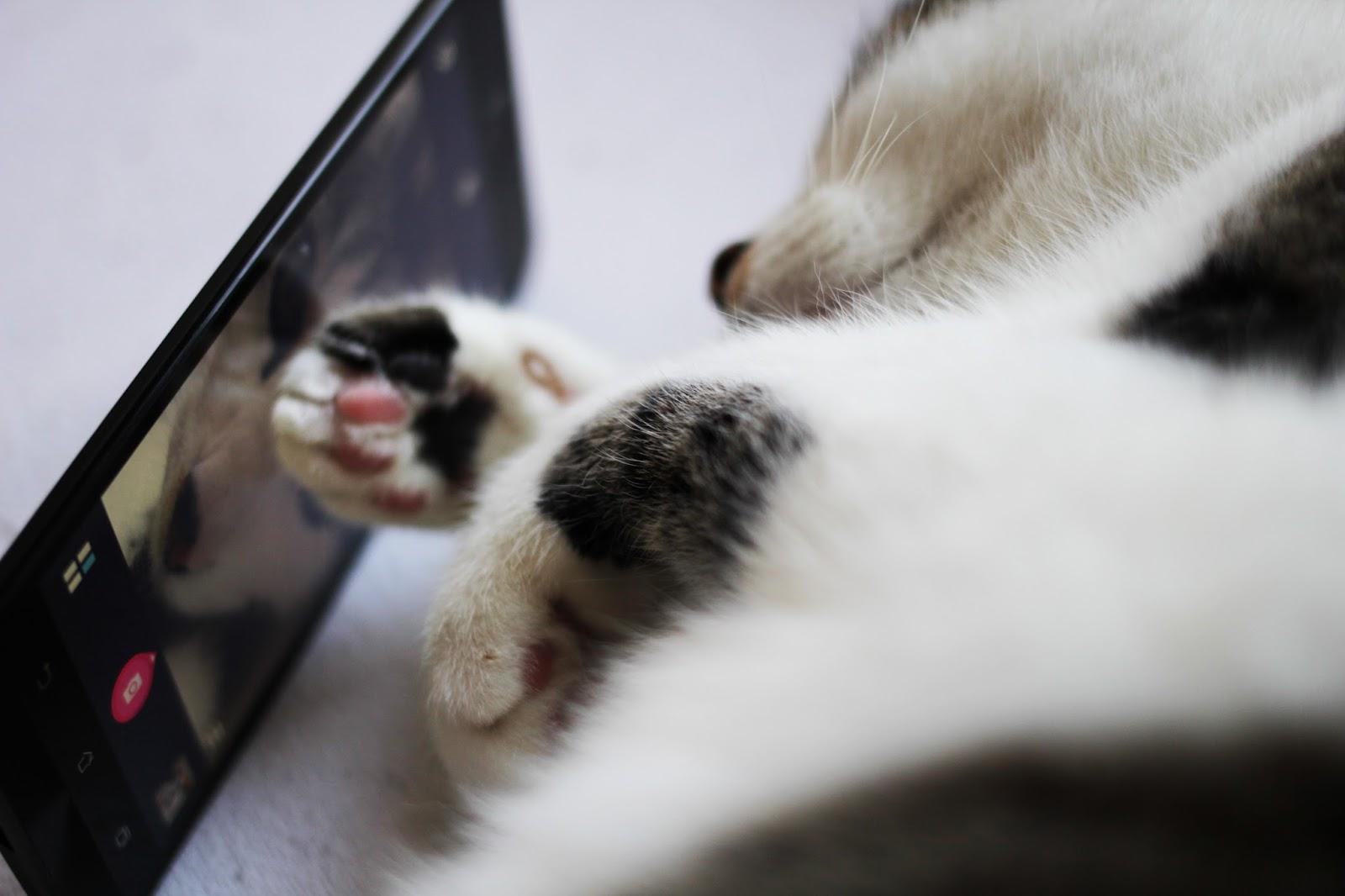 catfie selfie asus oskar kater