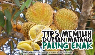 Cara Memilih Durian Enak Matang Siap Makan Musim Montong Harga Jenis