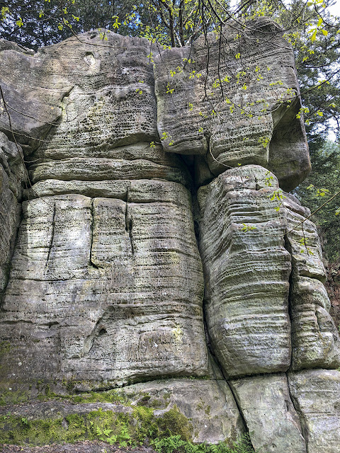 Eridge Rocks,  showing the erosion patterns.  26 April 2018