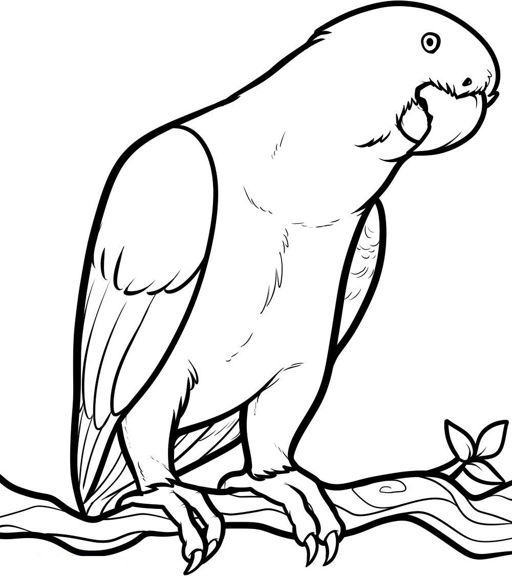 25 Cute Parrot Coloring Pages Your Toddler Will Love To Color | 1125x1000