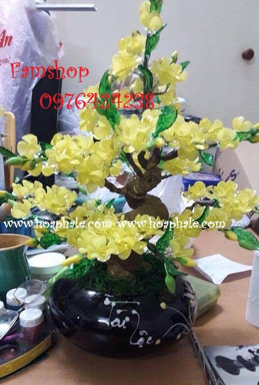 Goc bonsai cay hoa mai o Sai Dong