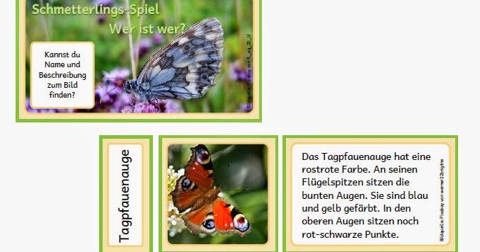 krabbelwiese im Ruhemodus Schmetterlinge