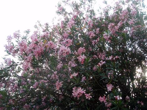 Disfrutar con el huerto y el jard n julio 2013 for Diferencia entre arboles de hoja caduca y hoja perenne