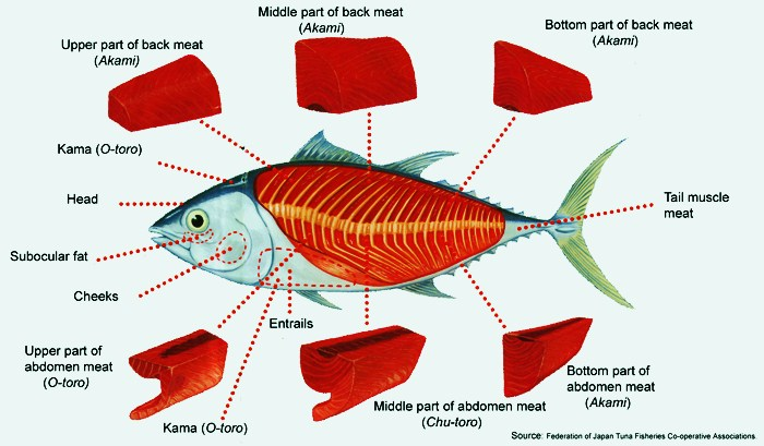All You Need To Know About The Tuna For Sushi Susherito Com