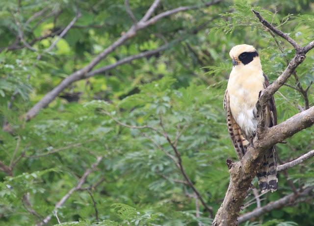 Climate change and habitat conversion combine to homogenize nature