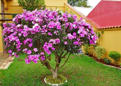Jardim colorido e decorado valoriza qualquer espaço