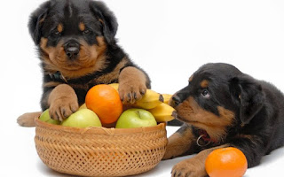 8 Fruits And Vegetables That Are Good For Dogs