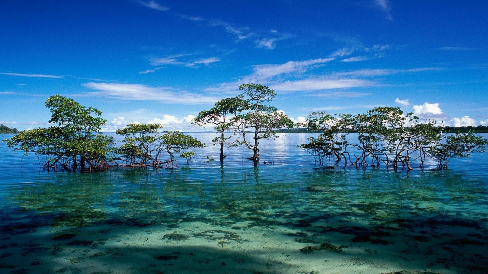 Hana Iti Beach, Huahine Island, Tahiti бесплатно