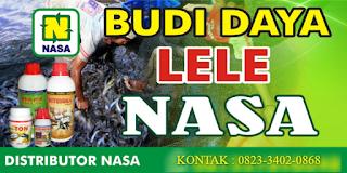 AGEN NASA DI Talo Kecil Seluma - TELF 082334020868