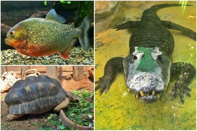 Pez, tortuga y cocodrilo en el zoológico Bioparco dentro del parque Villa Borghese de Roma