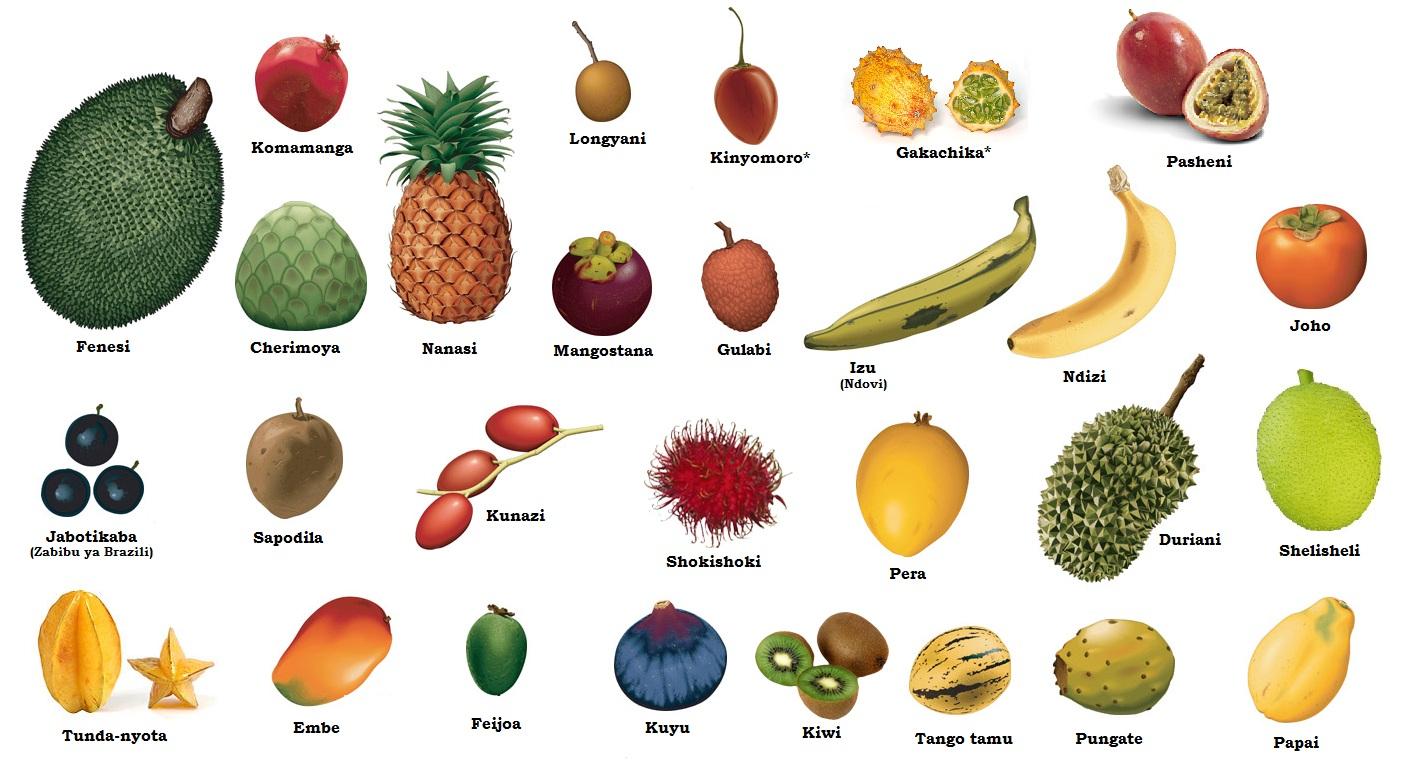 подвернуты все фрукты мира с названиями и картинками камера объективы это