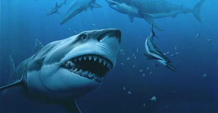 Bu köpek balığı oldukça heybetli görünüyordu, dişleri 18 santimetre uzunluğundaydı.