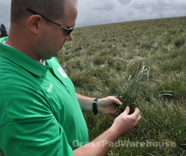 Inspecting Grass Seed Fields