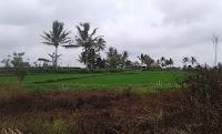 Dijual Tanah di Junjungan Ubud Gianyar Bali