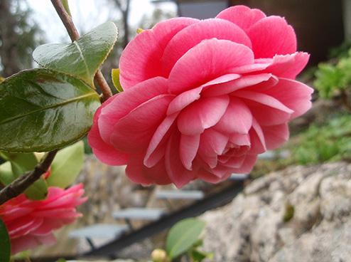 Arbustos que florecen en invierno - Cortavientos de jardin ...