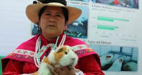 Hoy se celebra en el Perú el Día del Cuy (13 Octubre)