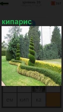Ландшафт с газоном и растущим кипарисом в центре всей композиции