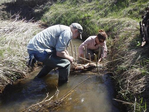 Quand les huitres et les castors aident à lutter contre le changement climatique