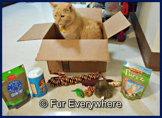 Carmine sits in a box with all of his Purr*Packs goodies in front of him