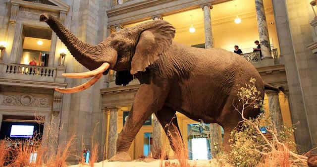 Bảo tàng lịch sử tự nhiên Mỹ
